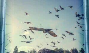 Bird Safety Window Film